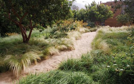 Grasses in Malibu